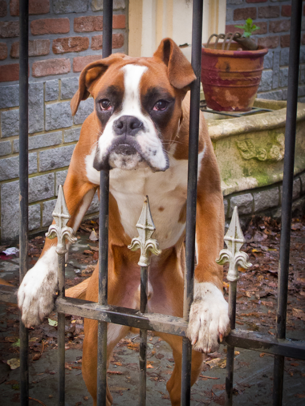 street photography dog