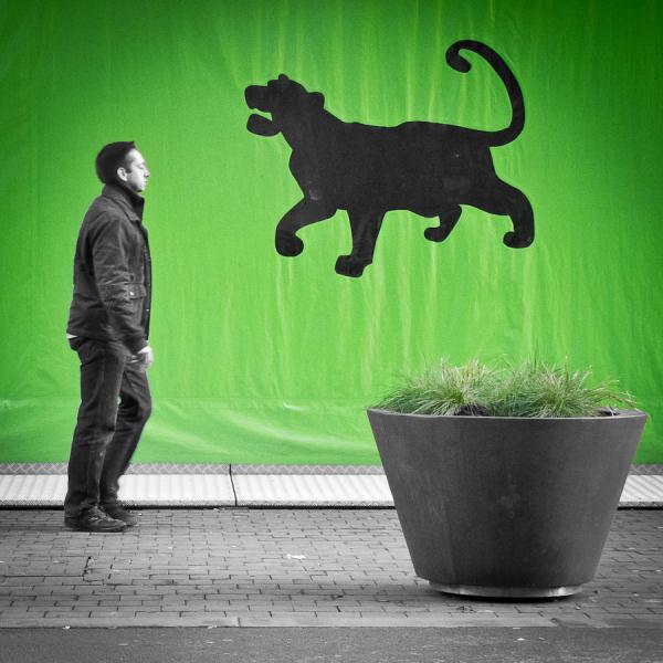 street photography animal