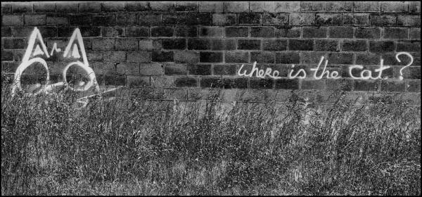 graffiti, cat