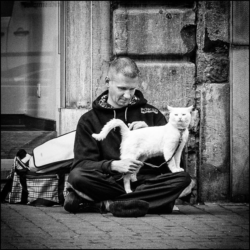beggar street photography cat