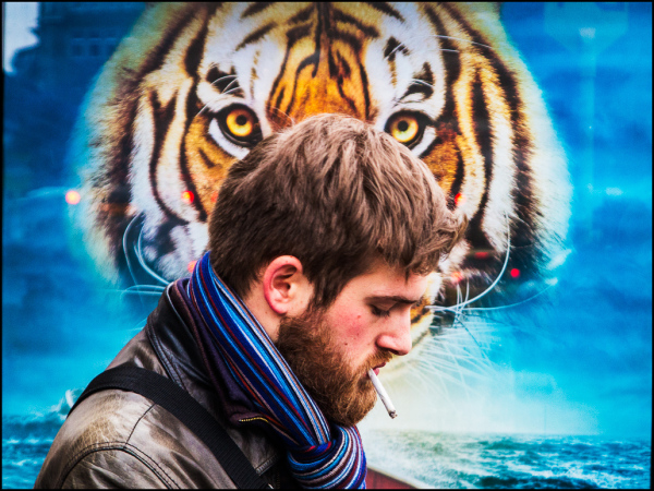 street photography tiger
