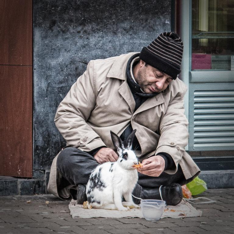 beggar rabbit