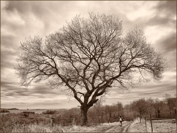 patway, tree