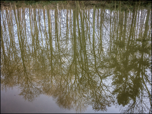 reflections, trees