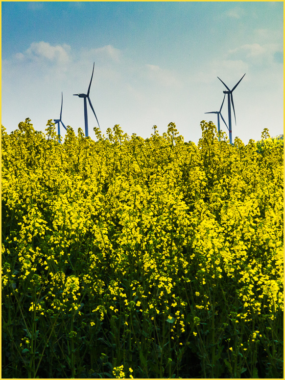 Colza, wind turbine
