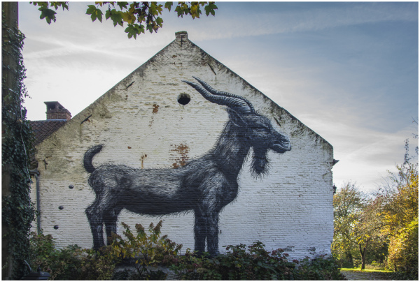 goat, graffiti