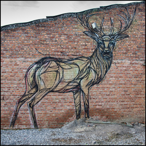 graffiti, Deer