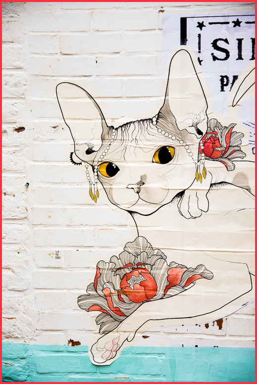 graffiti, cat