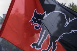cat, flag