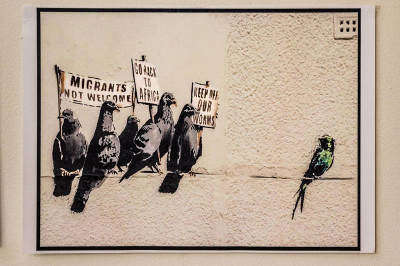 racist pigeons