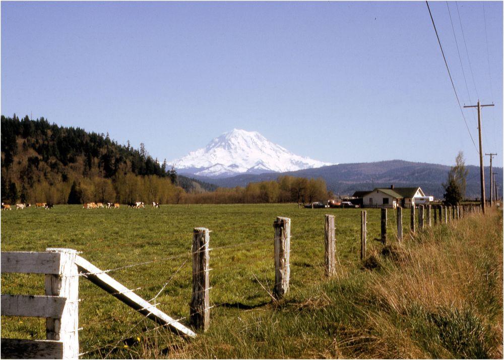 Senic view of Mt Ranier
