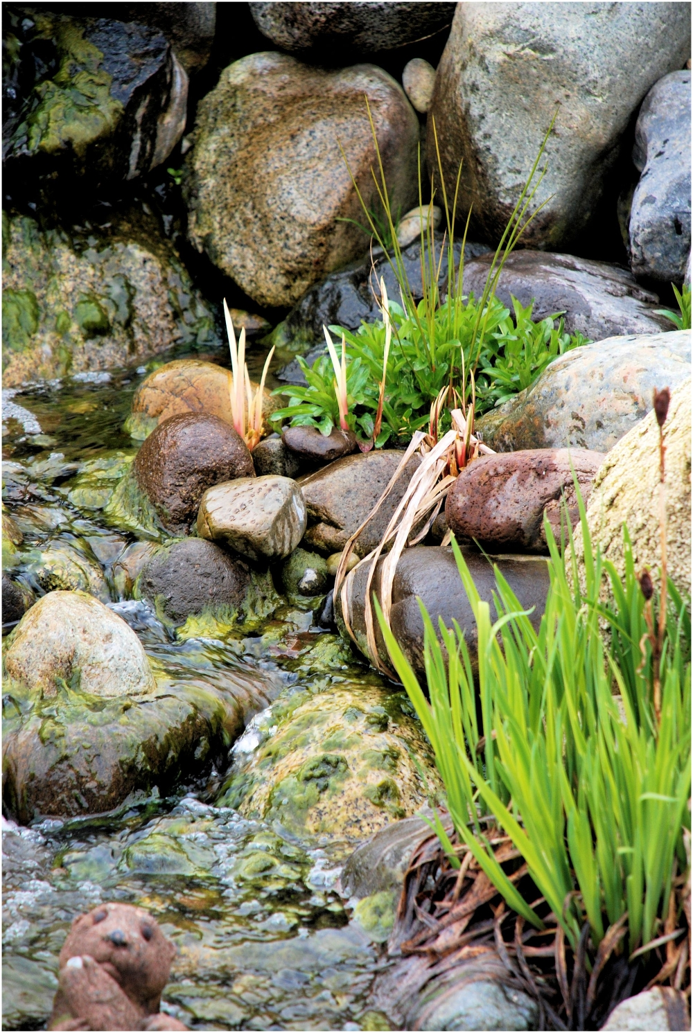 Gentle Pond