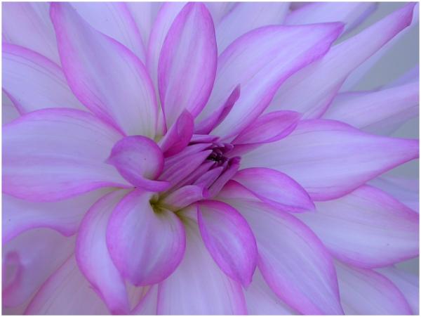 The wonders of flowers