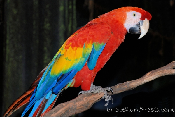 A Parrot at the Fair