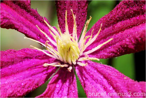 Oregon Gardens Pink/Purple