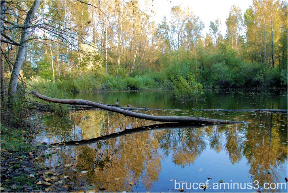 Fall at Panther Lake Federal Way