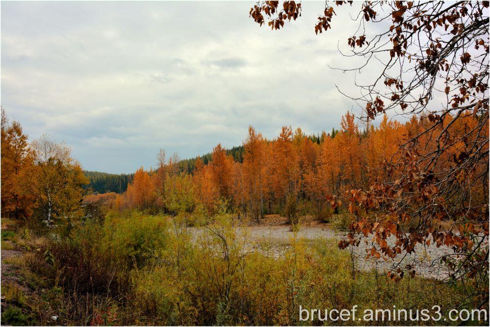 Idaho Fall Color