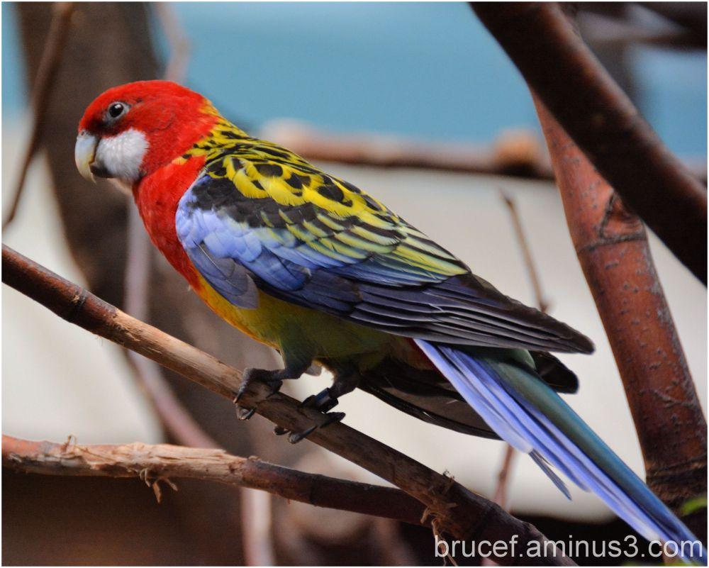A Color Pallet on a Parrot