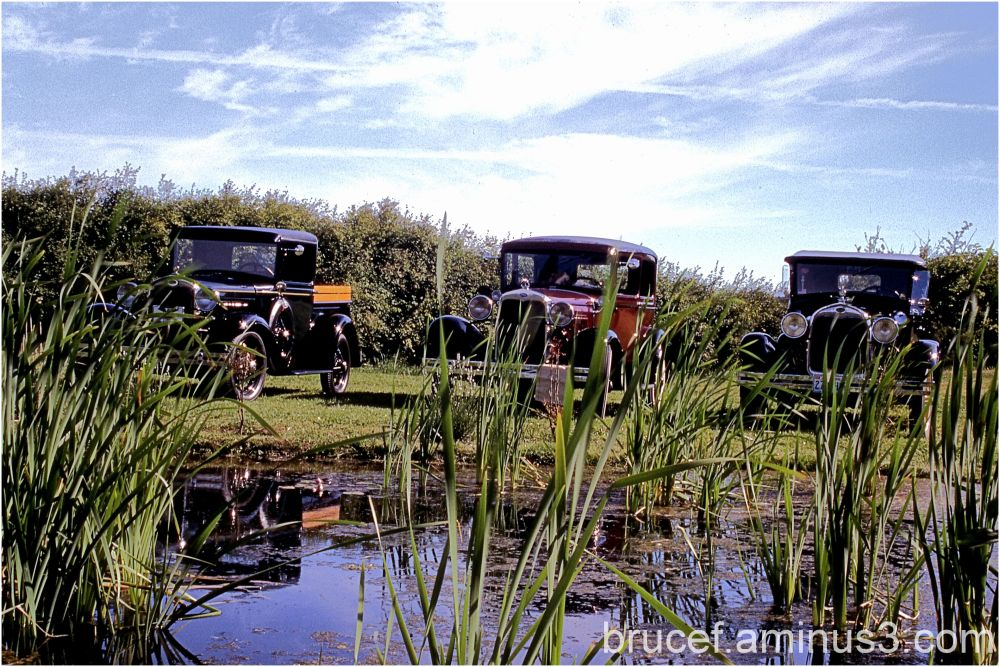Trucks watching for frogs