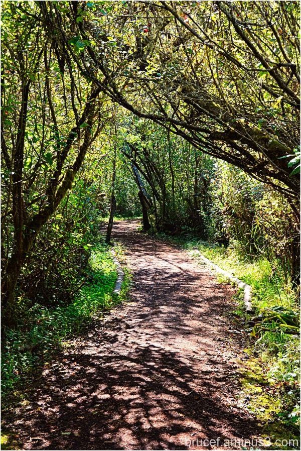 Mercer Slough Nature Park II