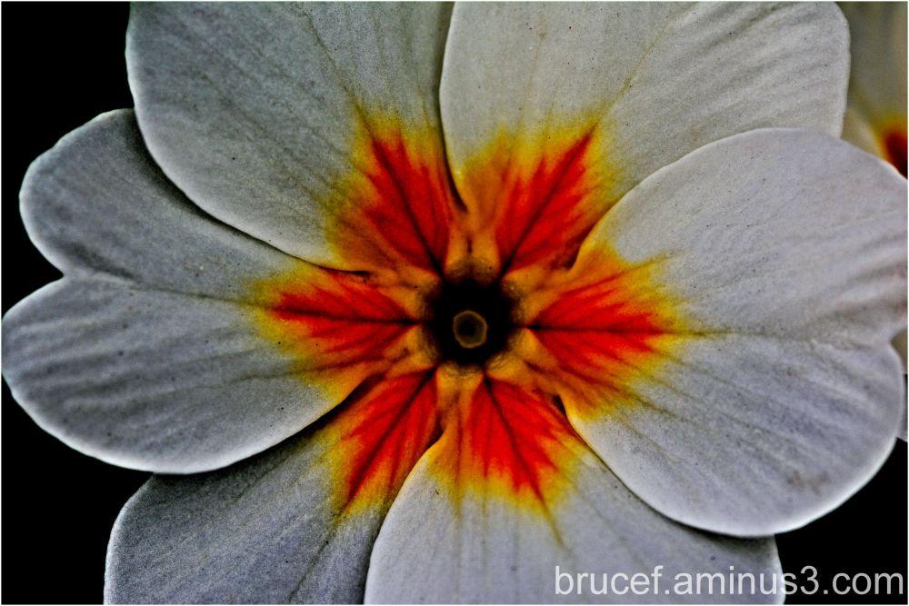 Leaf design in flower