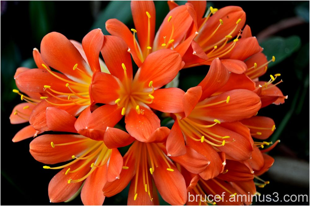 Natural Bouquet of Orange Flowers
