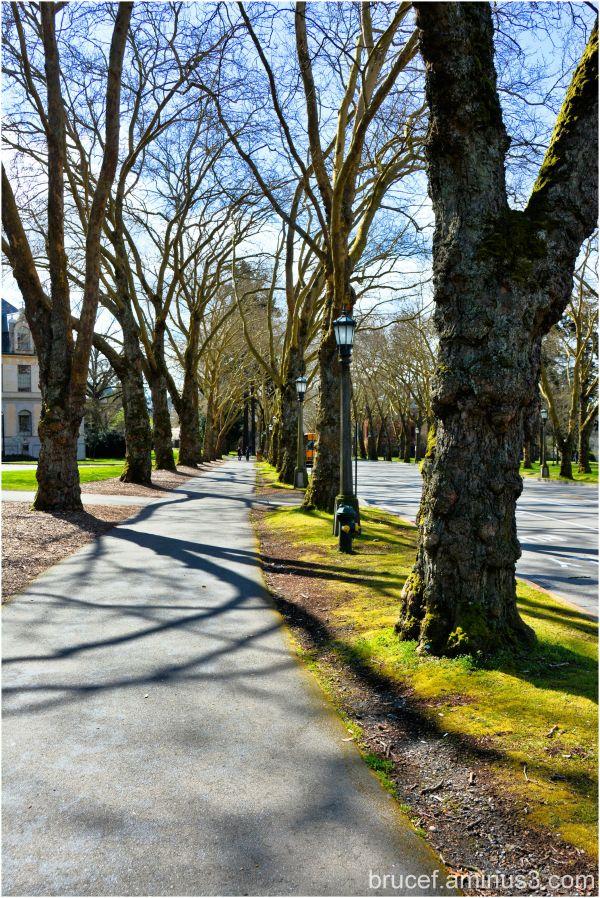 University of Washington   Spring Day