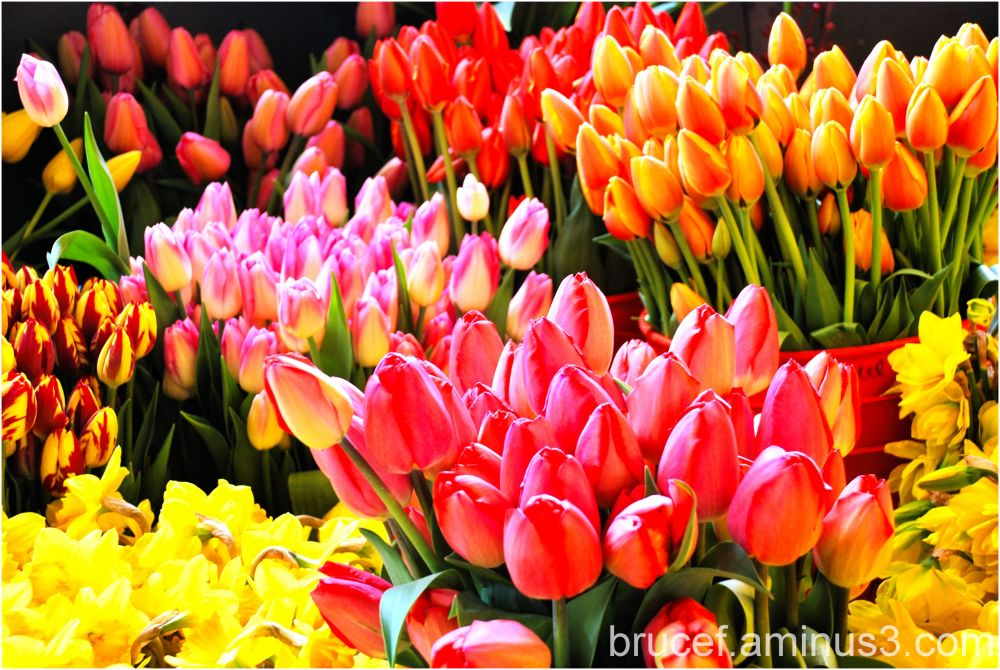 A sign of Spring - Tulips for sale