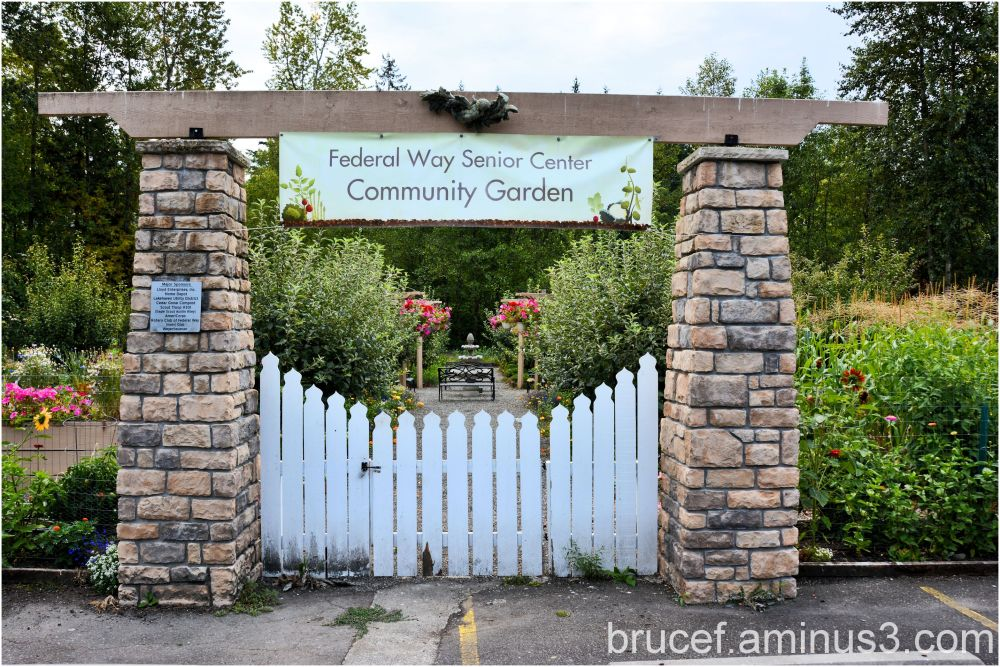 Federal Way Senior Garden