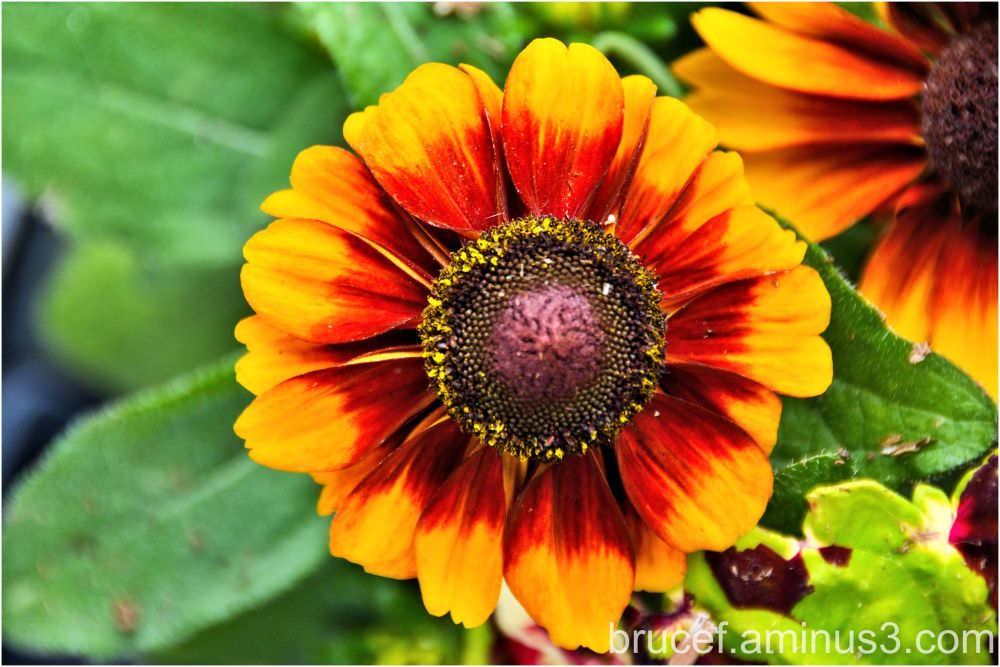 Daisy Like flower