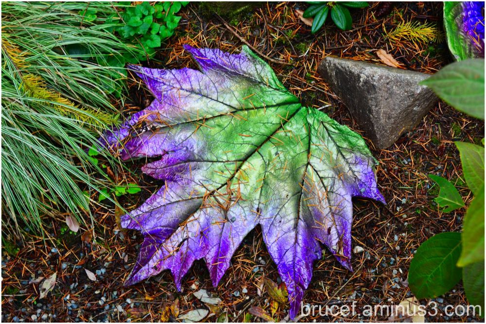 Purple Green Leaf