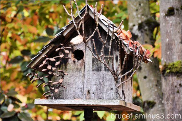 Tiny House for Birds