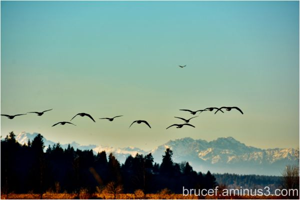 Birds taking off with Eagle circling