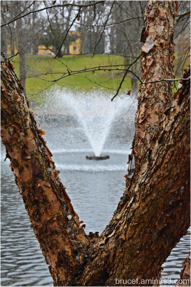 Fountain and tree