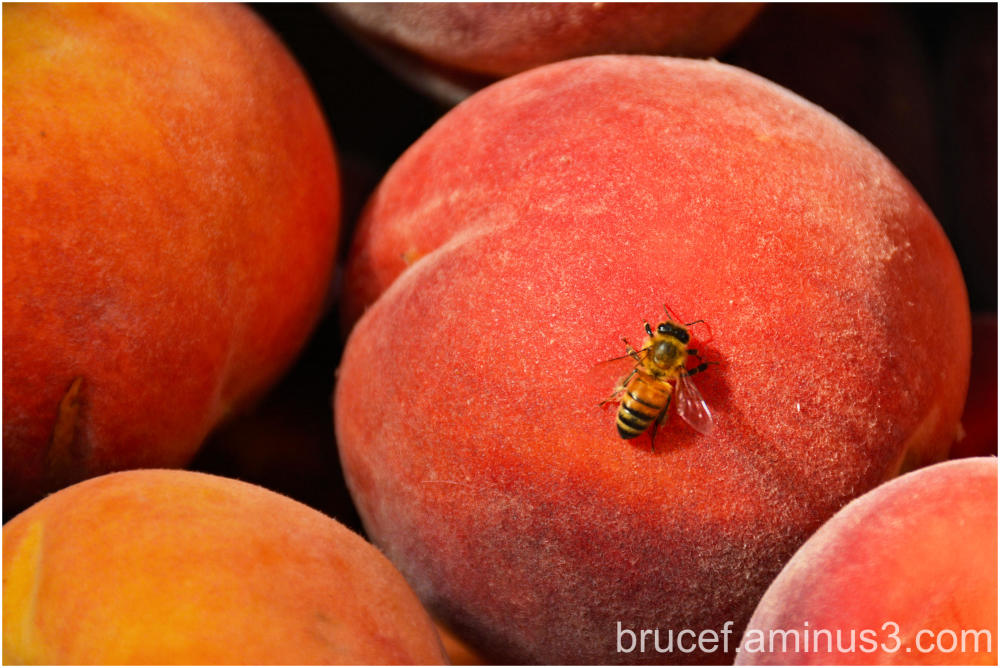 Peach with a bee