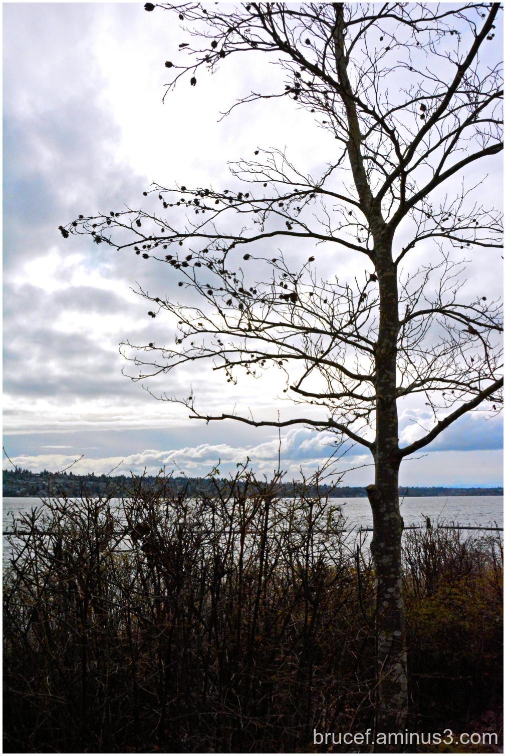 Dreary day at the Lake