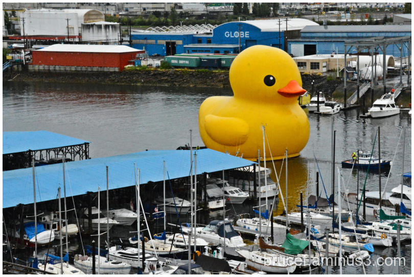 World's largest duck Tacoma
