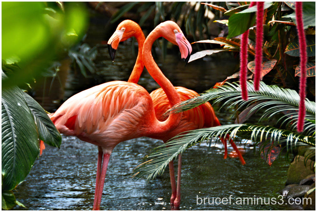 Flamingo with upside down heart