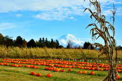 Mt Rainier and the Pumpkin Patch