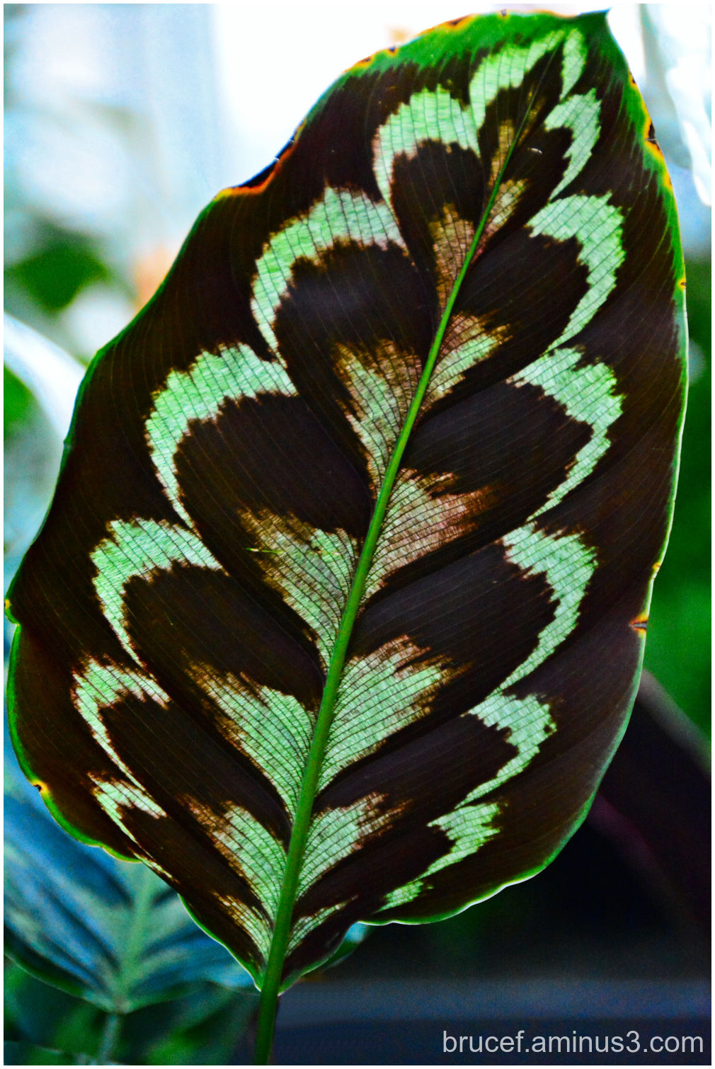 Lovely Leaf