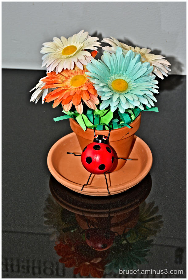Fake flowers and Giant Ladybug