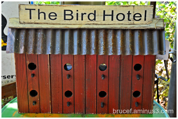 This Hotel is for the Birds
