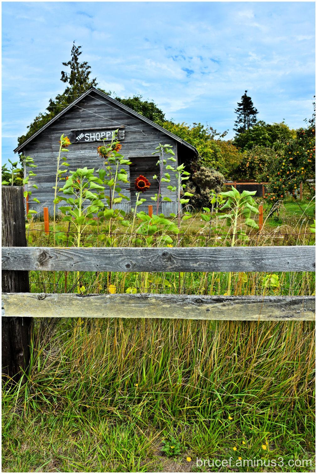 Gift House at B&B Lavender Farm