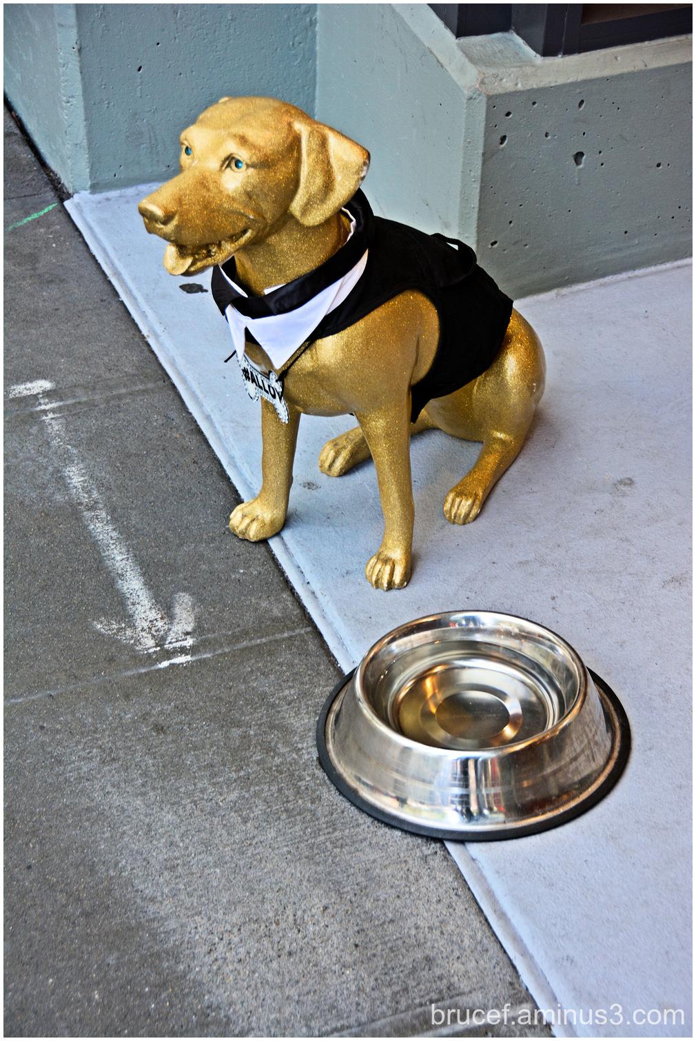 Doggies Dish