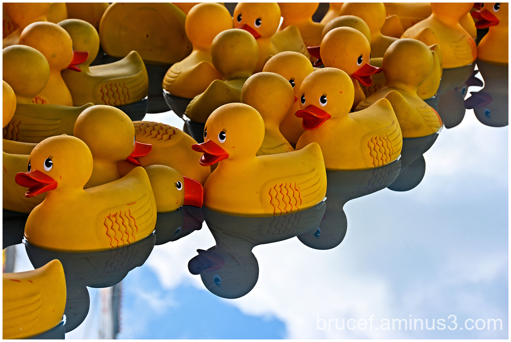 My Ducky friends at the fair