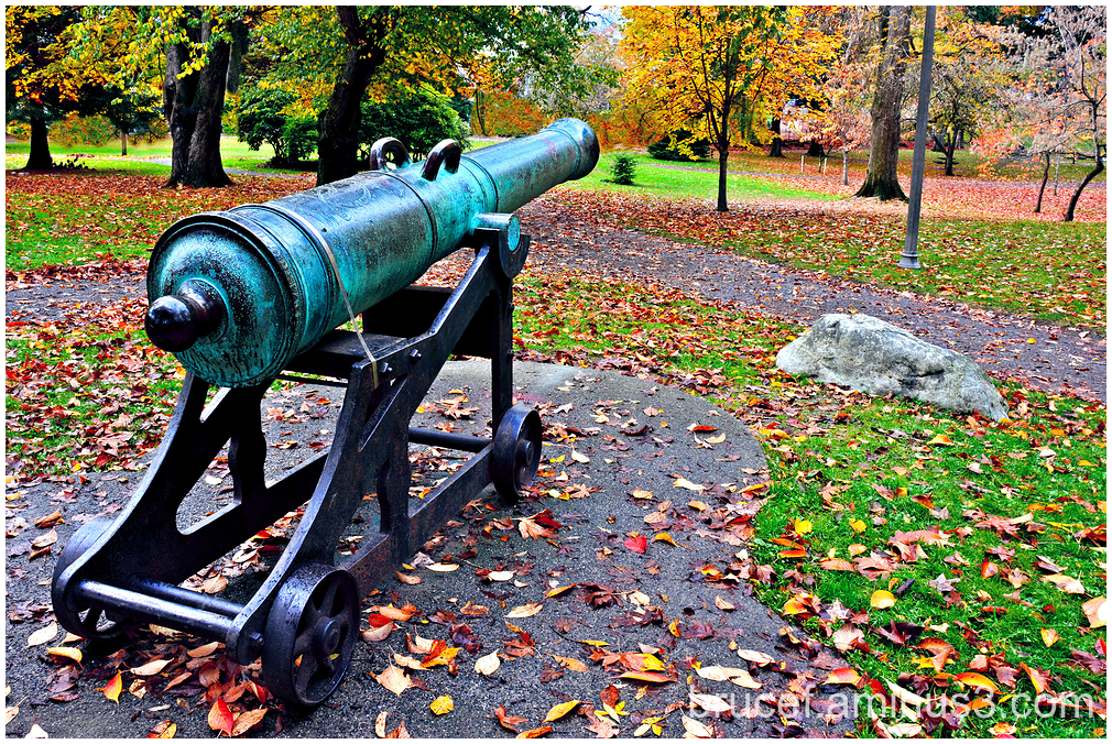 Cannon  and Veterans Day