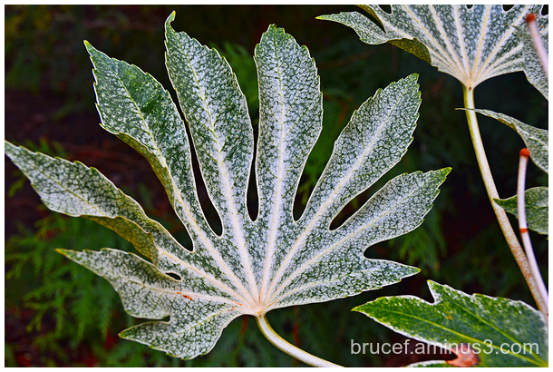 PowellsWoods Leaf