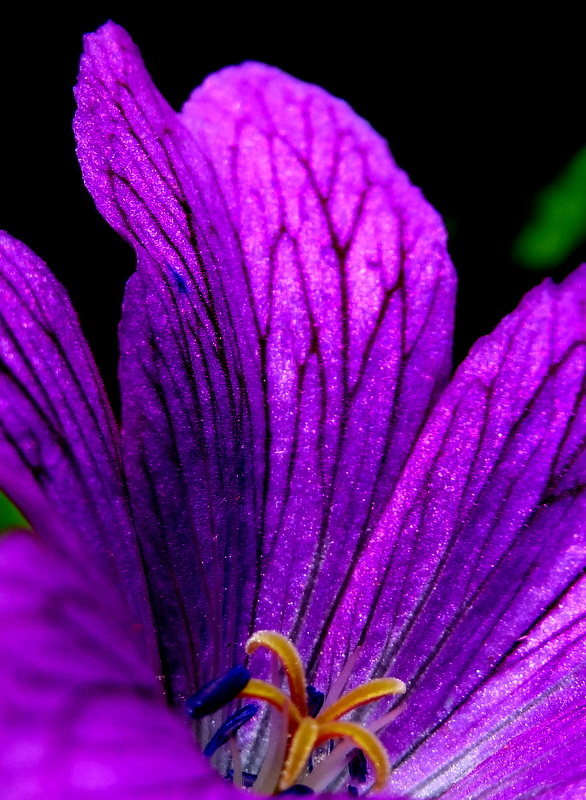 abstract petals 2