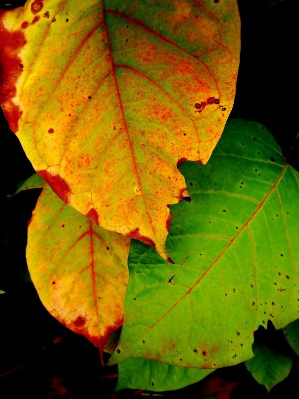 a glimpse of autumn 4/7