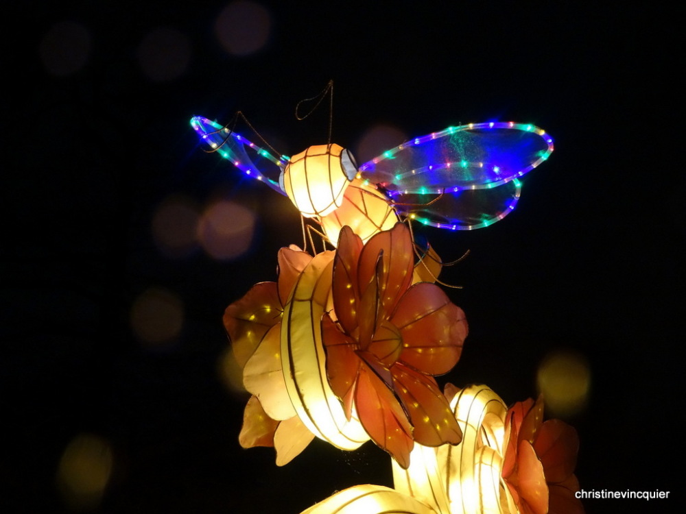China Light Festival 10
